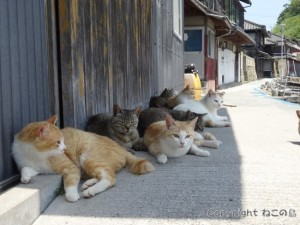 aoshima-cats114